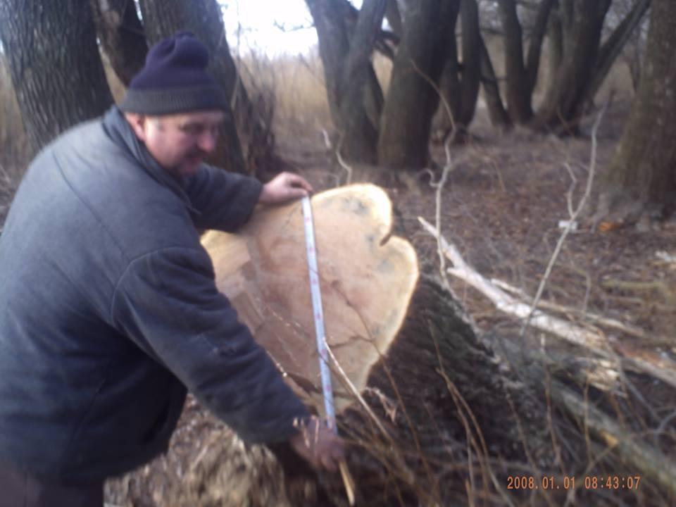 Вирубування дерев Чапаєвка 02