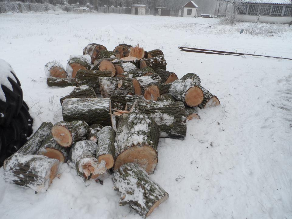 Вирубування дерев Чапаєвка 03