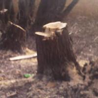 Вирубування-дерев-Чапаєвка