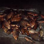 У Коробівці спіймали браконьєрів із 173-ма рибинами [ФОТО]