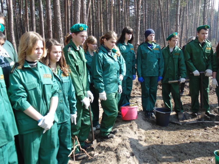 коробівське лісництво 01