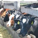 """Не ми встановлюємо правила гри на ринку молока"", – директор богуславецького СТОВ ""Прогрес"""