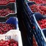 У місті розпочинається сезон вуличної закупівлі фруктів