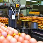 """Через Антимонопольний комітет """"Золотоніська птахофабрика"""" знизила ціну на яйця"""