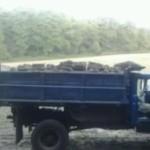 На території Вільхівського лісництва припинили незаконну вирубку дубів [ФОТО]