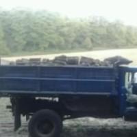 лісництво вирубка дуба 01