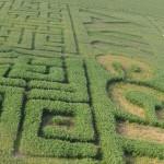 """Піщане запрошує на """"Кукурудзяний лабіринт"""" площею у три гектари"""