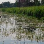 """""""Кошти на очищення золотоніських річок виділили надто пізно"""", – заступник голови ОДА"""
