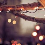 Золотоношу гуртом оздоблять новорічними прикрасами та годівницями [ПРЕВ'Ю]