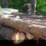 Біля Благодатного затримали вантажівку з нелегальною деревиною [ФОТО]