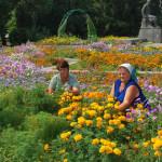 Золотоніські квітникарі – хто вони?