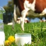 13 років за Євростандартами: секрети піщанського молока [ВІДЕО]