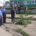 Бійці АТО ліквідували ділянку коноплі в Софіївці [ФОТО]