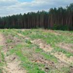 """У золотоніських лісах нарахували 500 гектарів """"молодняка"""" [ФОТО]"""
