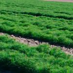Весняна кампанія: Золотоніський лісгосп підготував півтора мільйони сіянців