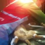 Центр стерилізації безпритульних тварин розпочав активну фазу роботи [ФОТО, ВІДЕО]