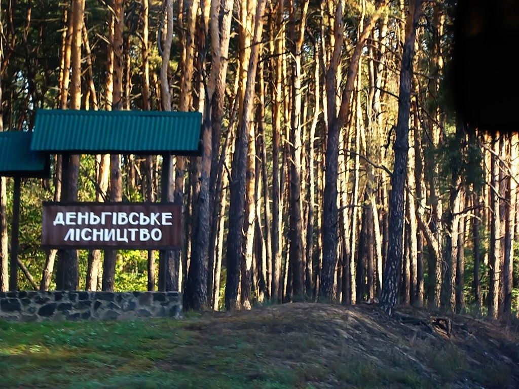 деньгівське лісництво