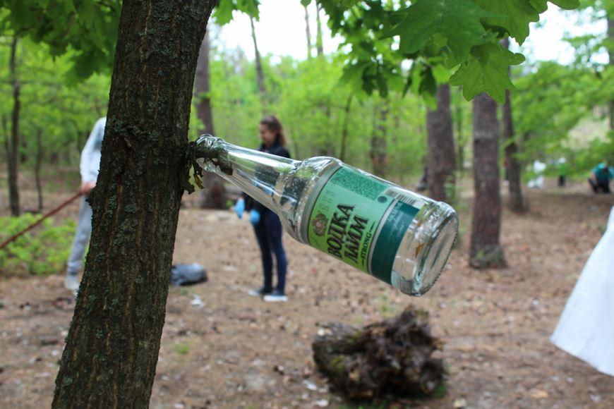чистий ліс 8